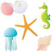 Ocean creatures