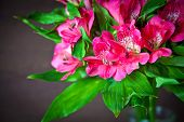Pink Flowers Of Alstromeria