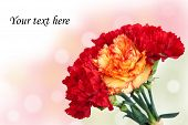 Bouquet Of Red And Yellow Carnation