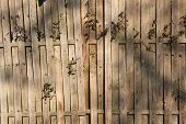 Plant growing through the wooden fence.