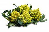 Romanesco Broccoli Cabbage
