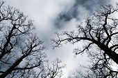 Black Leafless Trees Silhouettes Over Blue Sky