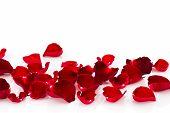 Petal Of Red Rose .