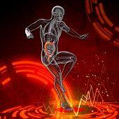Human Digestive System Large Intestine