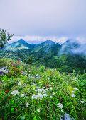 Morning Mist at Tropical Rainforest