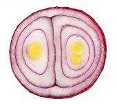 Sliced red onion. Macro