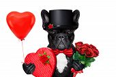 Valentines Groom Dog