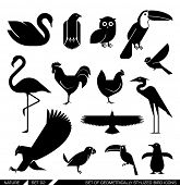 Set of various bird icons: swan, owl, eagle, rooster, flamingo, penguin, pelican, hen. Vector illustration.