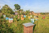 Farm Bee-garden With Multicolor Beehouses