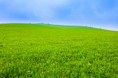 Green field with white clouds and blue sky