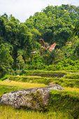 Idyllic landscape in Tana Toraja