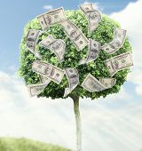 Money tree on natural background