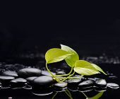 Green leaf on wet background