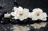 image of gardenia  - two gardenia with candle on black pebbles  - JPG
