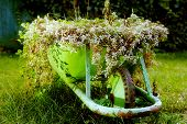 green rustic wheelbarrow full of colorful flowers on a grass lawn