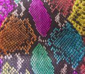 picture of green snake  - Close up of Color Snake skin background - JPG