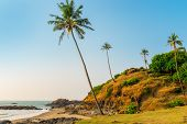 Hill With Coconut Palm Trees In A Tropical Resort Location
