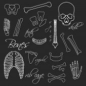 Human Bones White Outline Symbols On Blackboard Eps10