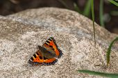 Butterfly On A Big Rock