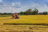 harvester machine on rice field