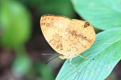 Rustic butterfly and green leaf