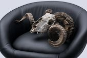 Ram skull in an armchair.