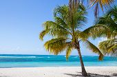 Palm Trees On The Beach Of Isla Saona
