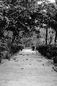 foto of lantau island  - park area near buddhist temple in Hong Kong - JPG
