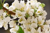 stock photo of monocots  - The balmy breath of spring - JPG