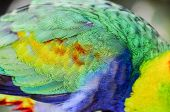 picture of tropical birds  - Parrot Tropical Bird with a Colroed Father - JPG
