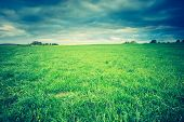 pic of grassland  - Vintage photo of green springtime meadow landscape with cloudy storm sky - JPG