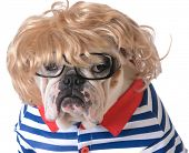 foto of wig  - dog dressed up like a human with wig - JPG