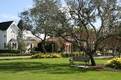 pic of crepe myrtle  - quaint homes overlook a village green in small american town - JPG