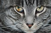 "foto of rabies  - a dangerous look from a cat that says: ""watch out!""