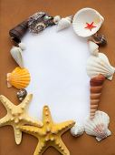 Ocean frame with seashells and starfishes