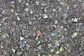Постер, плакат: Asphalt Inclusions Of Colored Stones