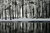 Winterforestriverreflection_6876