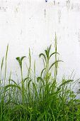 grass and wall