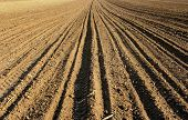 stock photo of farrow  - ploughed field - JPG