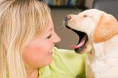 Cute Labrador Retriever puppy yawning at his mom