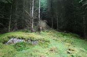 Magic Wood, Forest