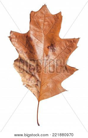 poster of Brown autumn leaf like plant natural botany texture isolated