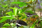 Jagd auf Schmetterlinge