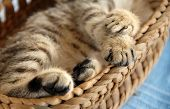 Paws In Basket