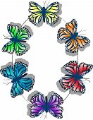 Butterfly Color Wheel