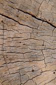 Background Texture Of Weathered Beach Wood
