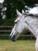 Pretty Horse Head
