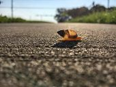 Slow Snail Crossing the Road Beautiful backlit sunny summer day poster