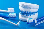escovas de dentes e dental moldes de gesso individuais