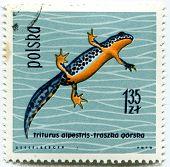 POLAND - CIRCA 1963: Polish stamp shows Triturus alpestris (Alpine Newt), series devoted to reptiles
